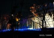 光の丘/2009年600-1.jpg