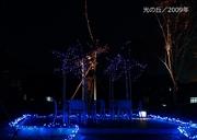 光の丘/2009年600-2.jpg