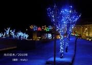 光の並木etc/2010年-2.jpg