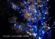 写真集/2006年600-3.jpg